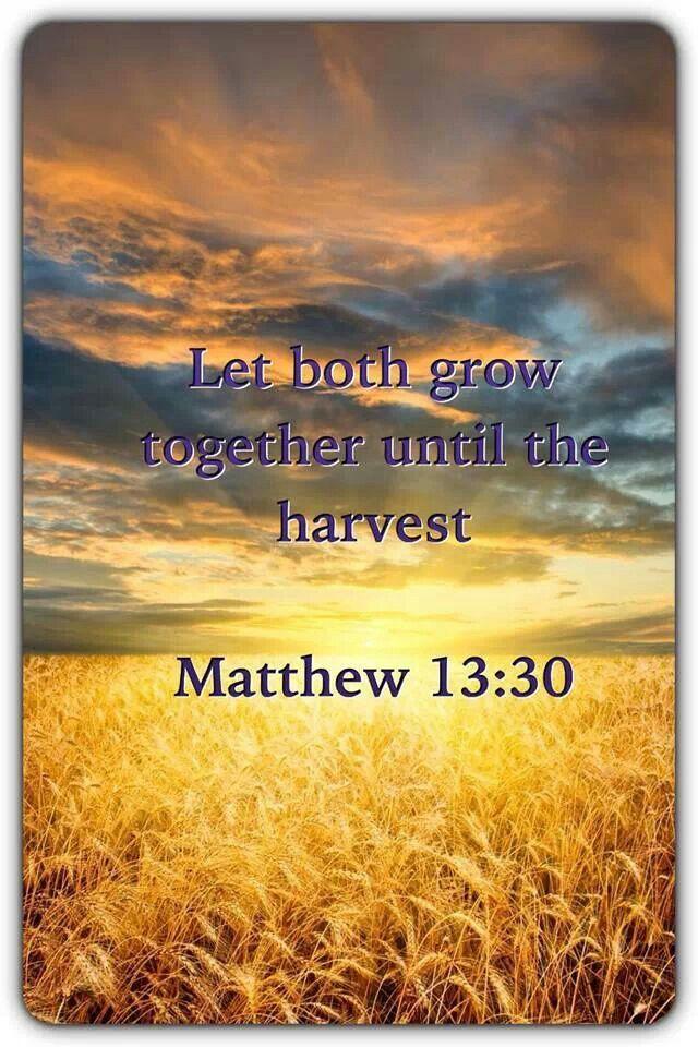 247 Best Matthew Images On Pinterest Scriptures Bible