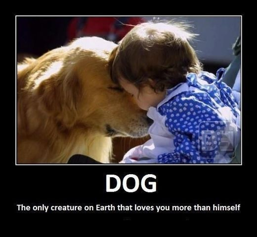Truth...Puppies, Dogs, Best Friends, Sweets, Bestfriends, Quote, Pets, Golden Retriever, Animal