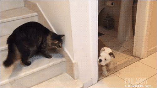 14 cats straight up smacking down haters | Cat gif