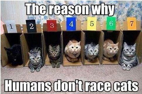 Race cats