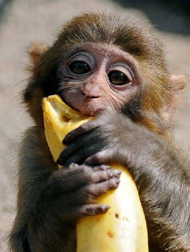 Gotta love a banana
