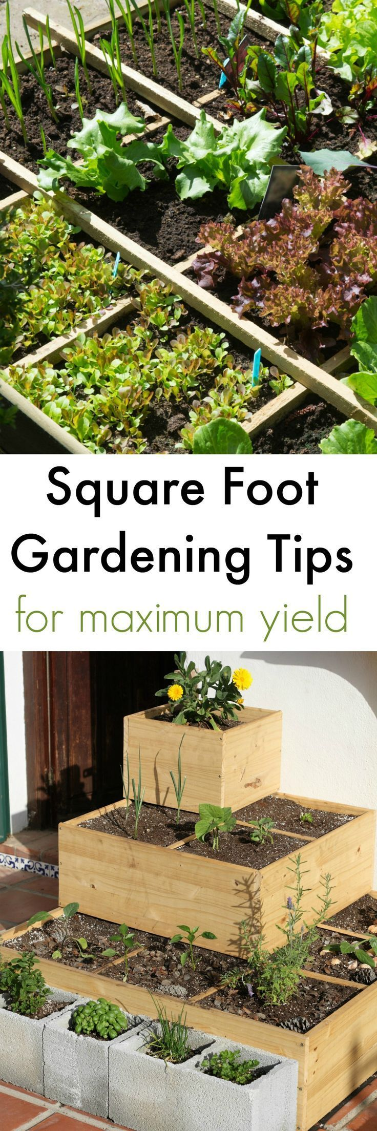 Square Foot Gardening Method for Maximum Yield