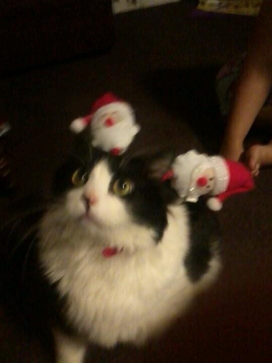 Christmas kitty ... My cat bobby