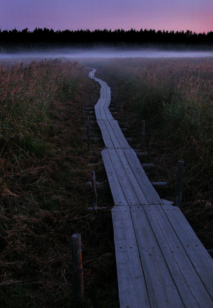 Viikin luonnonsuojelualue