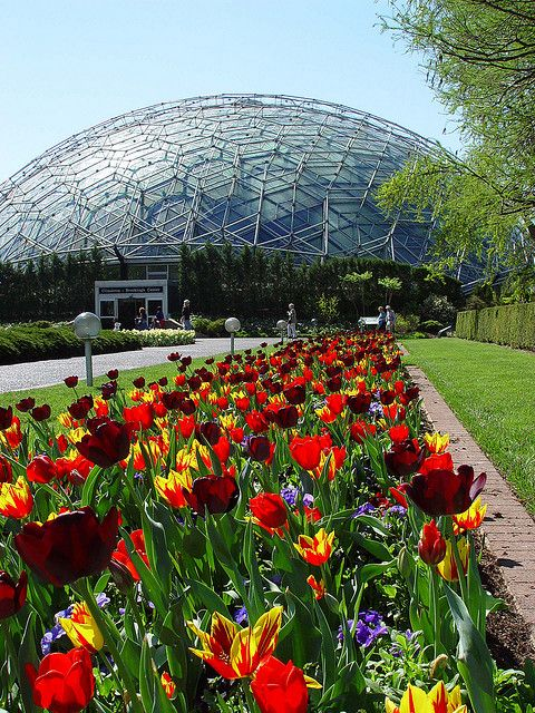 Climatron in spring by Missouri Climatron, geodesic dome, at Missouri Botanical Garden, opened in 1960, incorporating principles of R Buckminster Fuller.