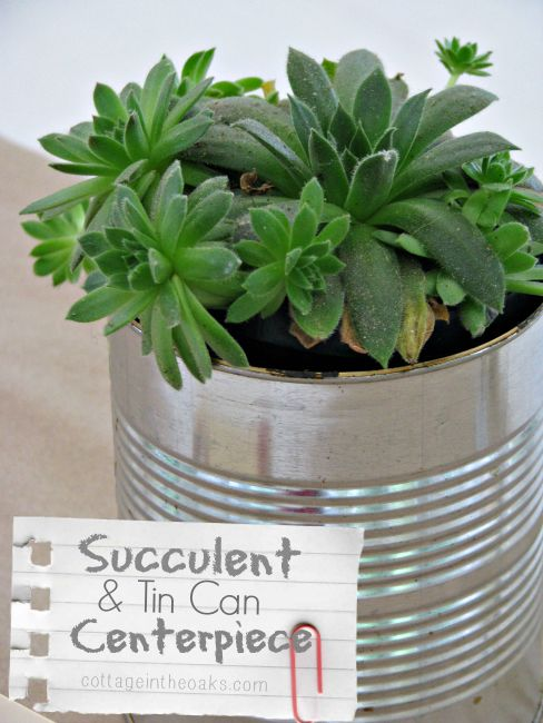 Succulents in tin cans ::: Centerpiece
