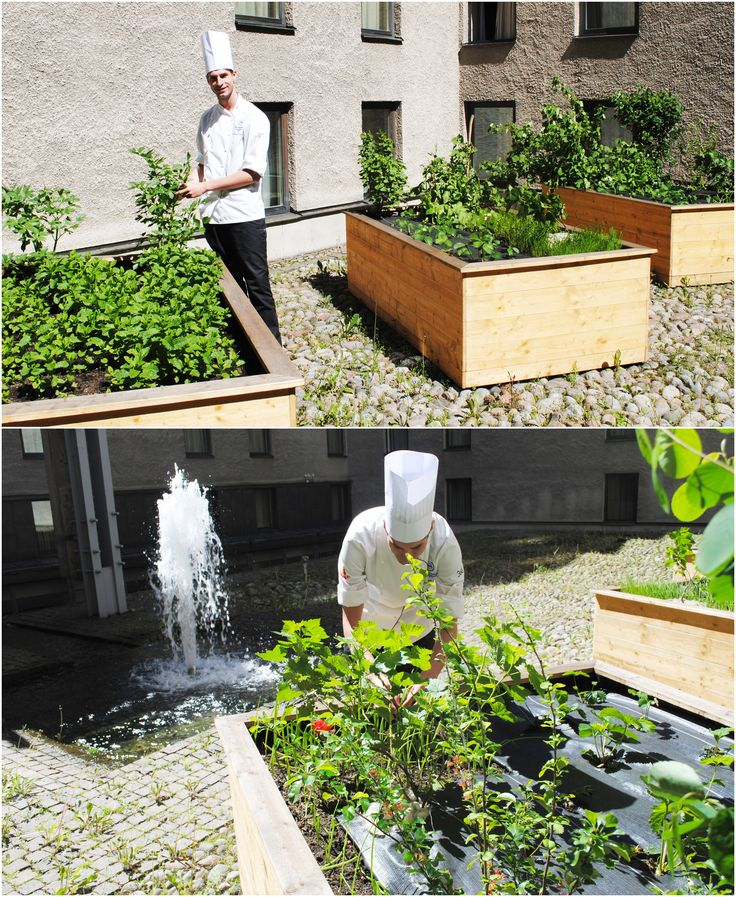 Head chef Markus Rotard takes care of the herb garden our sunny courtyard. Fresh herbs for the 360° dinner.