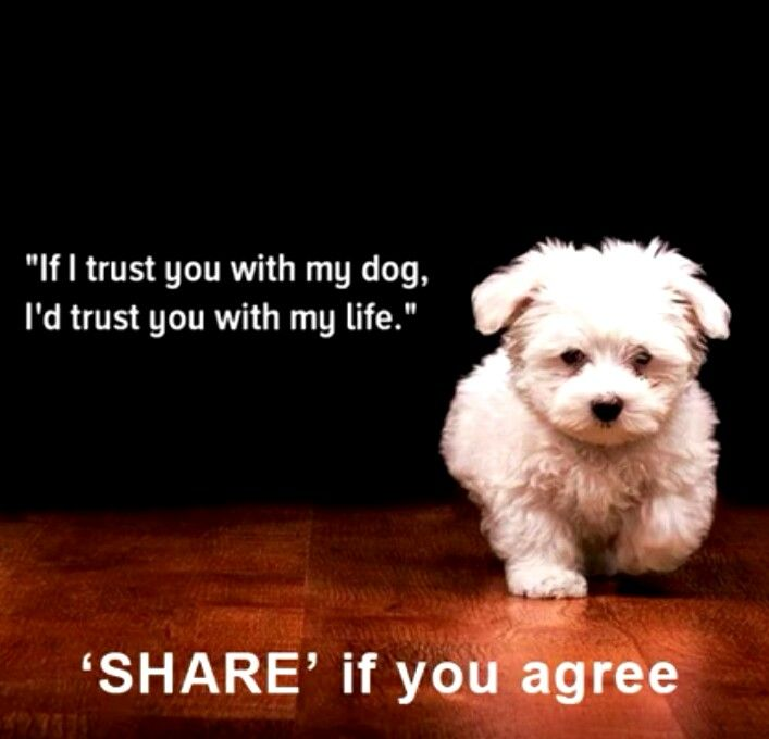 I Love My Dog Quotes Gorgeous Love My Dog Quotes Sayings