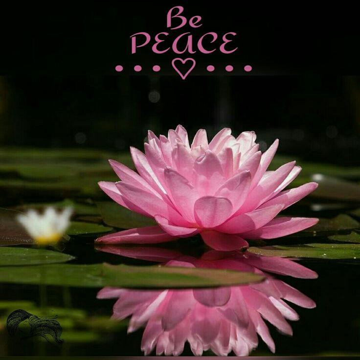 Be Peace ༺♡༻ WILD WOMAN SISTERHOOD™ #wildwomansisterhood #meditation #bepeace