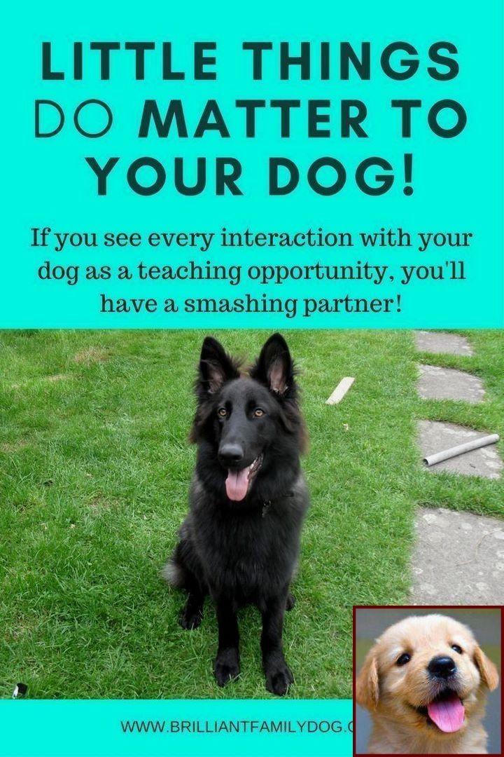Dog Behavior At 6 Months And Dog Training Classes Columbus Ohio