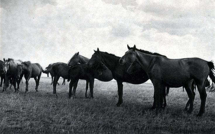 Группа кушумских лошадей