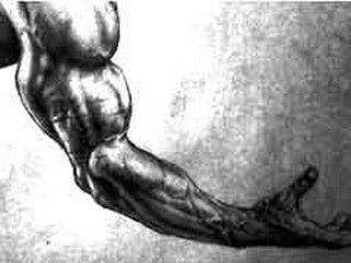 musculation des bras