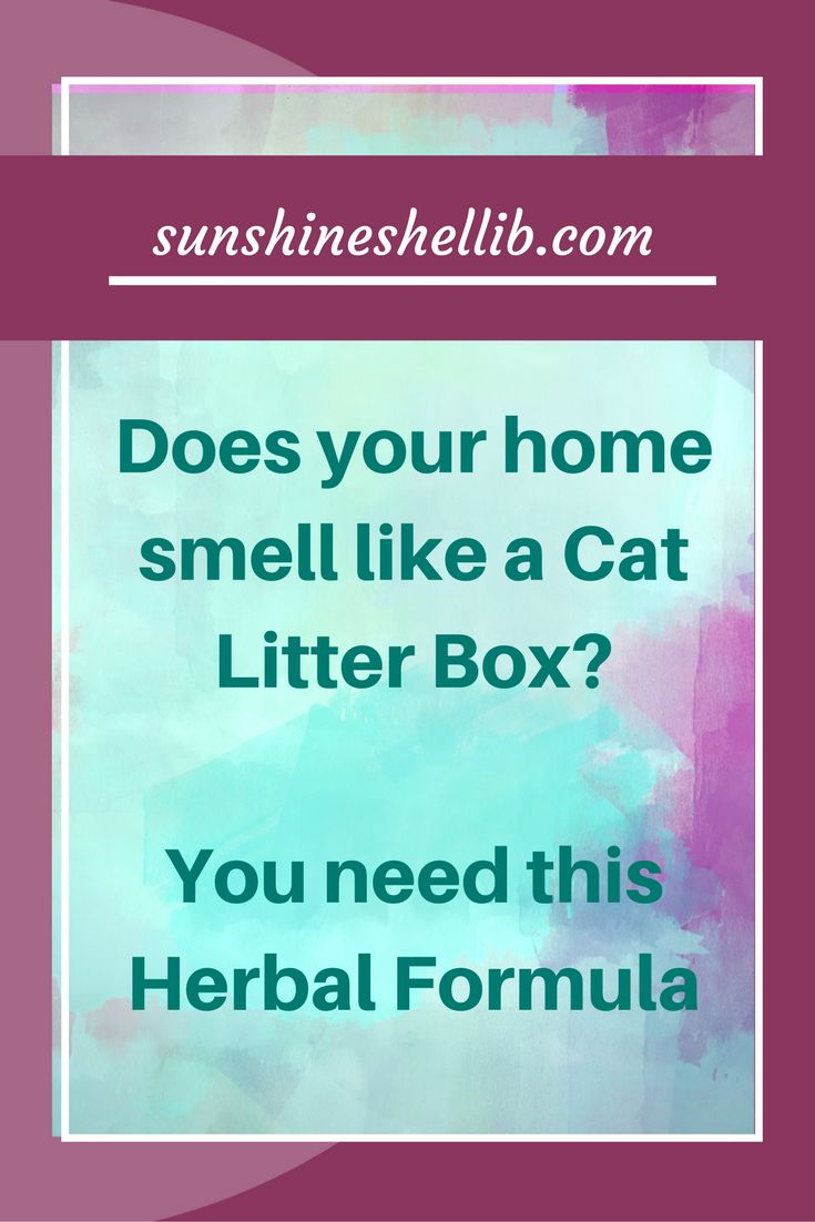There is nothing worse than arriving home after a long hard day opening your front door and nearly being knocked out because of the SMELL!! Cat urine is one of the most difficult smells to remove from any surface. I have successfully used a herbal remedy with my 4 cats to train them. Read more about it here #cats #catspray #caturine #caturinesmell #howtogetridofcaturinesmell #catpee #litterbox #smellyhouse