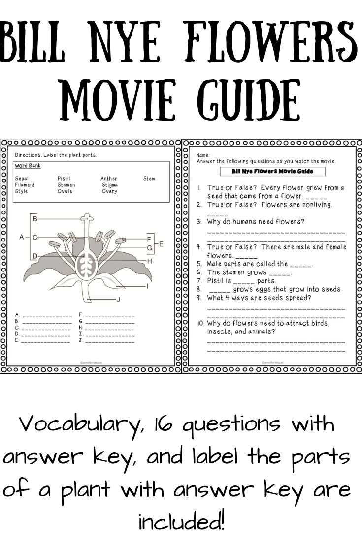 Video Worksheet Bill Nye Flowers (With images) | Bill nye ...
