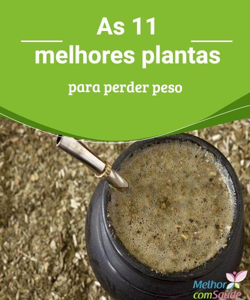 As 11 melhores plantas para perder peso  Conheça algumas das melhores plantas para perder peso e combine-as com uma dieta equilibrada, bastante água e a prática de atividade física.
