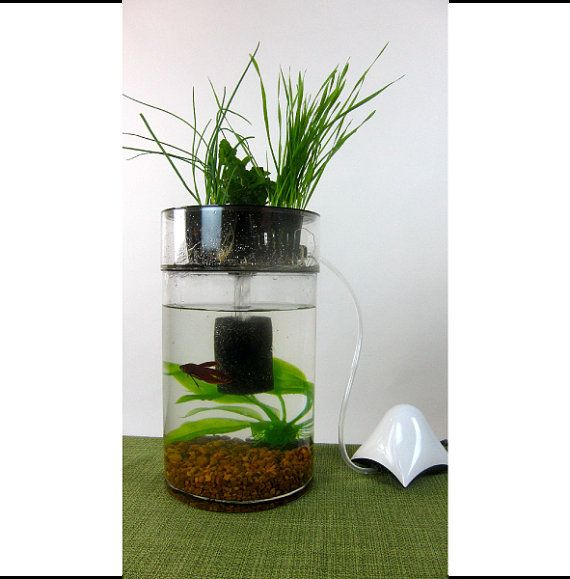 Indoor herb garden betta fish tank aquaponics for Fish tank herb garden