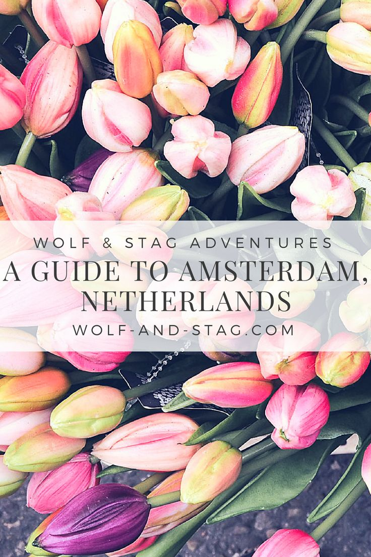 Heading to Amsterdam for a weekend trip? The essential travel guide to Amsterdam, Netherlands: where to eat, what to do, and where to stay | wolf-and-stag.com