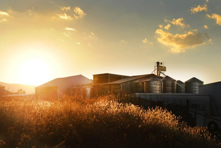 Silos in the late afternoon light, Mudgee. photo by Amber Hooper.