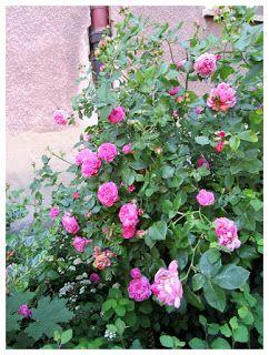 FASHION Secret Garden