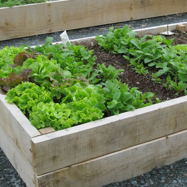 raised vegetable garden ideas of raised vegetable beds gardeners rule garden ideas on a budget 640x640