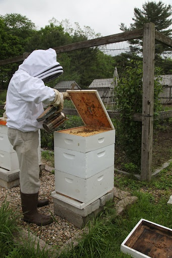 Martha Stewart blog post about expanding her hives