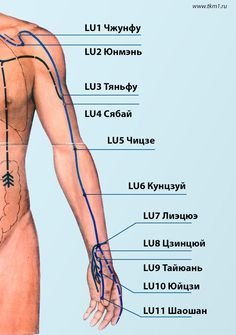 Канал Легких:Юй Цзи борьба с одышкой и астмой,массировать круговыми движениями.  недостаток воздуха,  словно не могут вдохнуть нужное количество воздуха- массировать точку Тай Юань, это точка – источник канала легких, Для питания почек очень хорошо задействовать точку Чи Цзэ (LU5;Точку Цзин Цюй (LU8)против кашля;Кун Цзуй использоваться при лечении простудного кашля и воспаления миндалин,лечит геморой.Шао Шан (LU11) у внешнего края ногтя большого пальца руки-уменьшит боль и воспаление в…