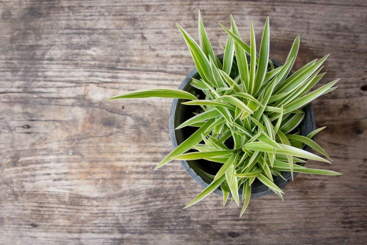 5 Hardy Hard-to-Kill Houseplants for Apartments with Low Light