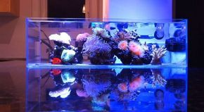 Minimalistic Nano Reef #aquarium