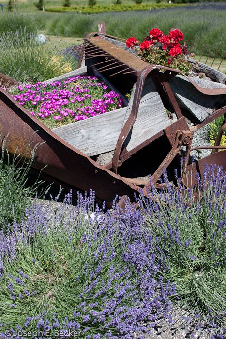 flower garden - rusty implement as container
