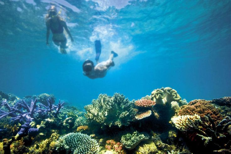 The iconic Great Barrier Reef is blessed with the breathtaking beauty of the world's largest coral reef. Learn more about Australia's Great Barrier Reef.