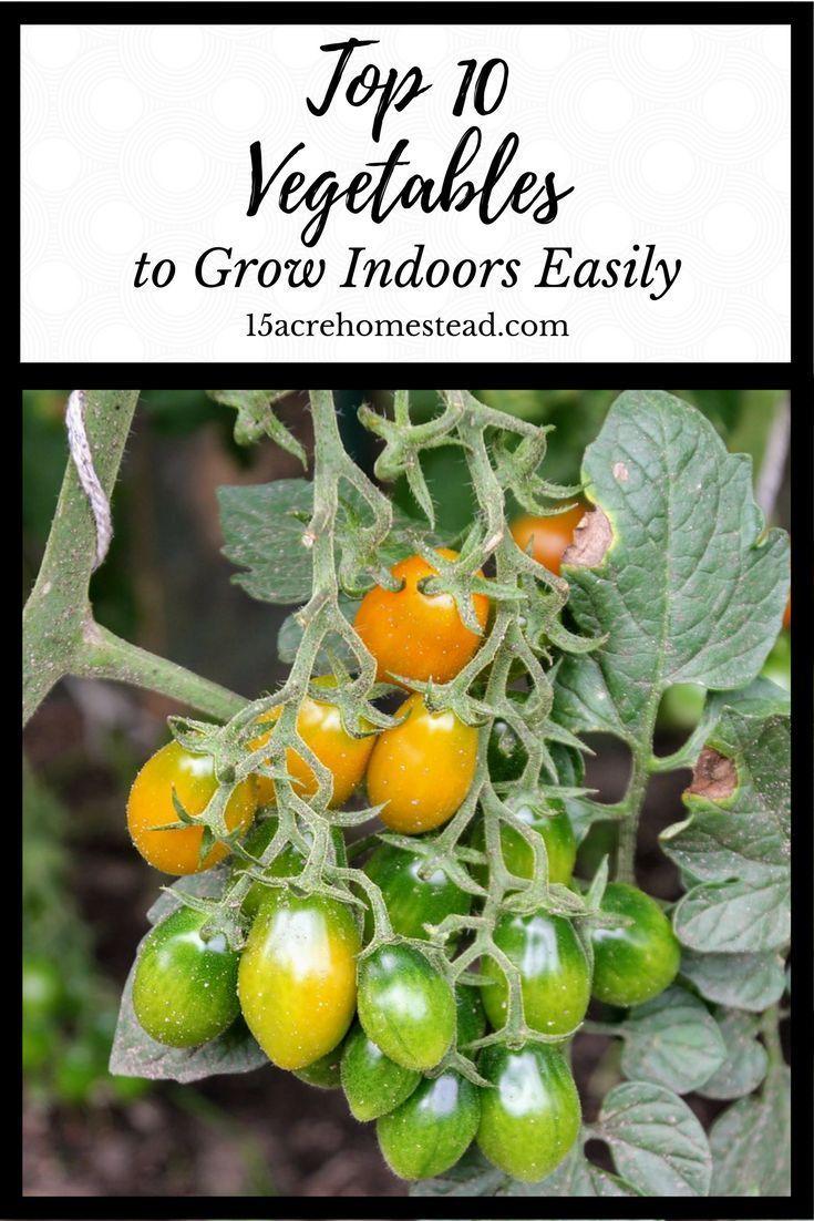 4953 best Growing Vegetables Indoors images on Pinterest Urban