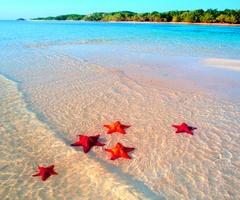 So pretty!!!: Beaches, Favorite Places, Life, Beautiful, Starfish, Summer, Sea, Travel, Bahamas