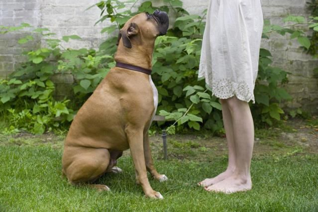 Learn which basic dog training commands every dog should know. These can help you to overcome common dog behavior problems and will help keep your dog safe.