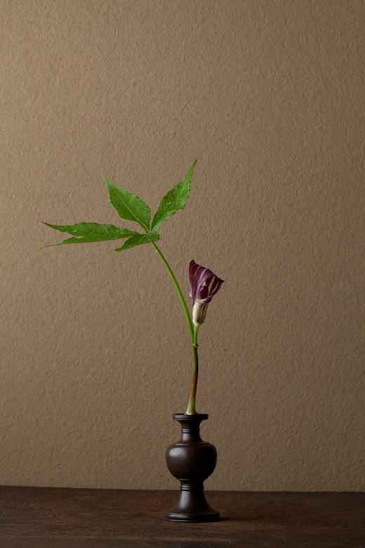 一日一花 川瀬敏郎 2012年6月8日(金) 地下世界を思わせる花。古代的でもあります。 花=芦生天南星(アシュウテンナンショウ) 器=古銅亜字形華瓶(鎌倉時代)