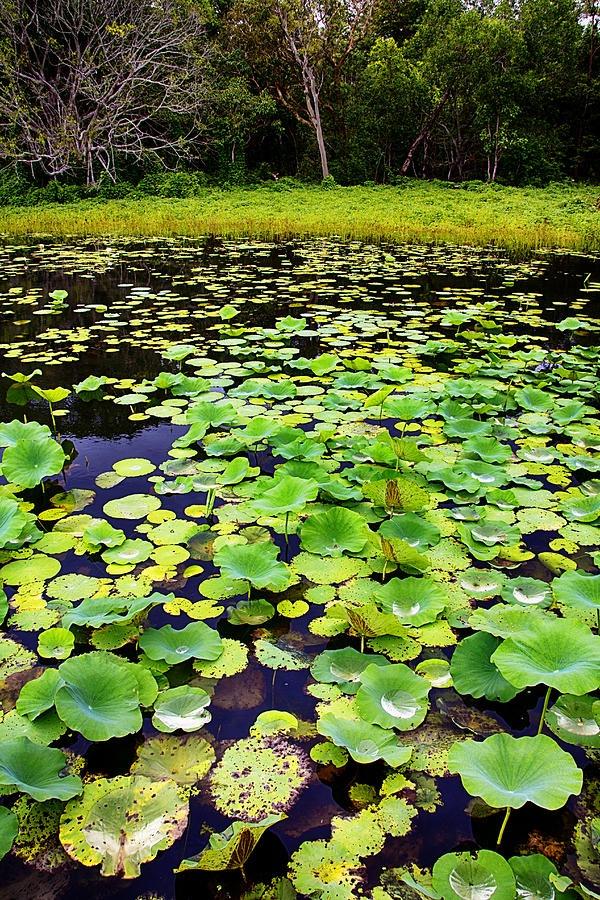 Bilabong-kakadu National Park - Australia Like us on Facebook https://www.facebook.com/BinaryExhibitions?ref=hl