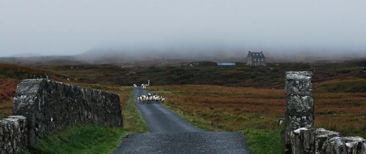 Misty heathland, Isle of Mull.