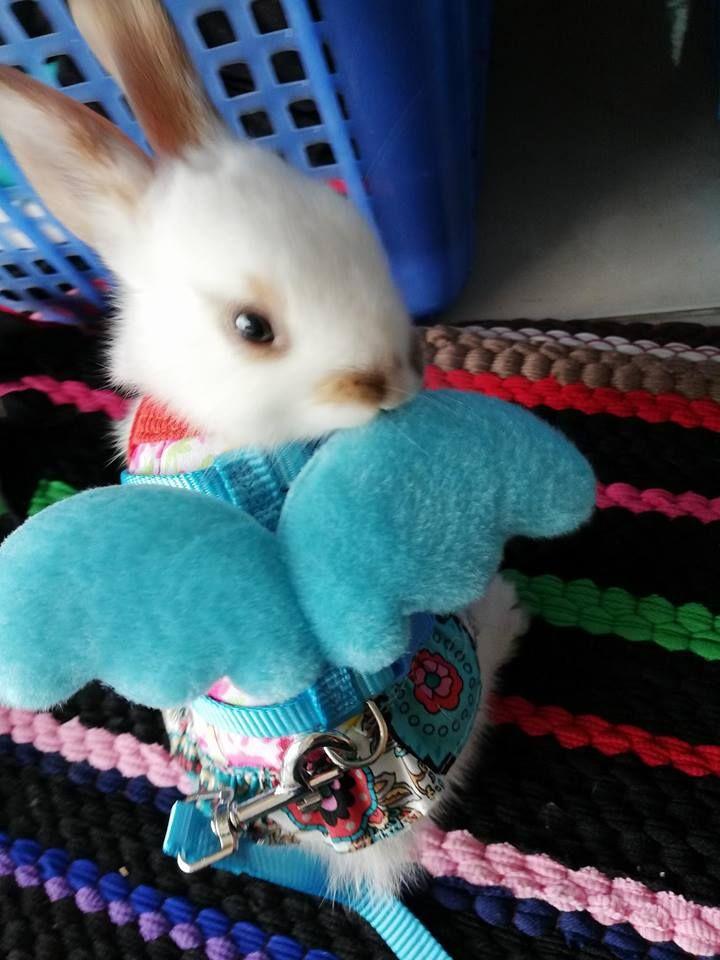 Pin By Yanin On Pet Benny Bunny Animals Pets