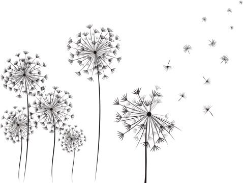 Dandelion hand drawn illustration on white background. Simple and…