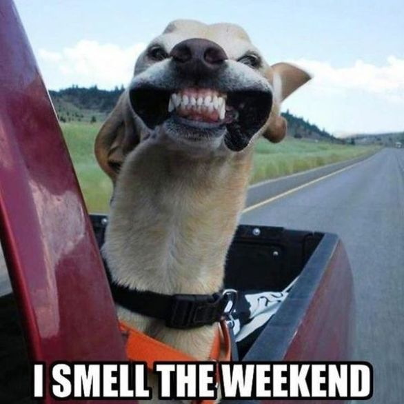 What S Trending Whatstrending Twitter Friday Dog Weekend Humor Funny Animals
