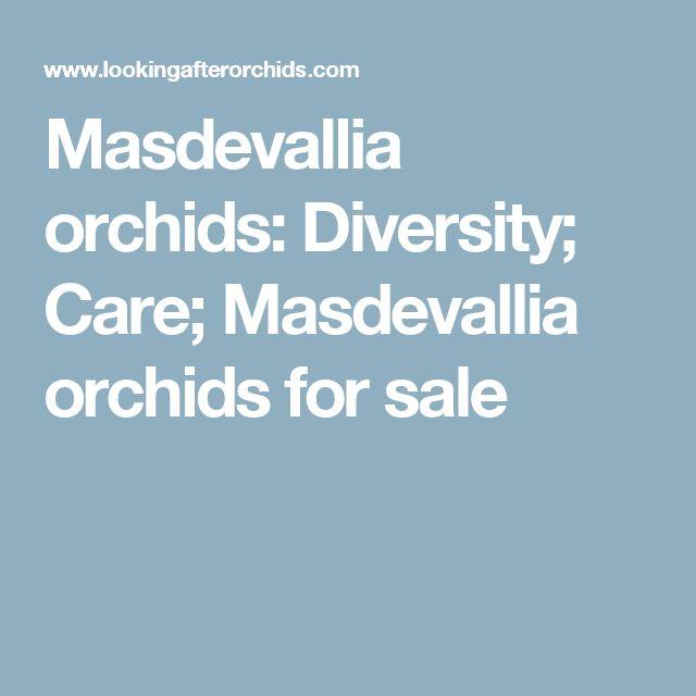 Masdevallia orchids: Diversity; Care; Masdevallia orchids for sale