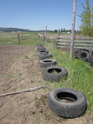 Planting potatoes in tires