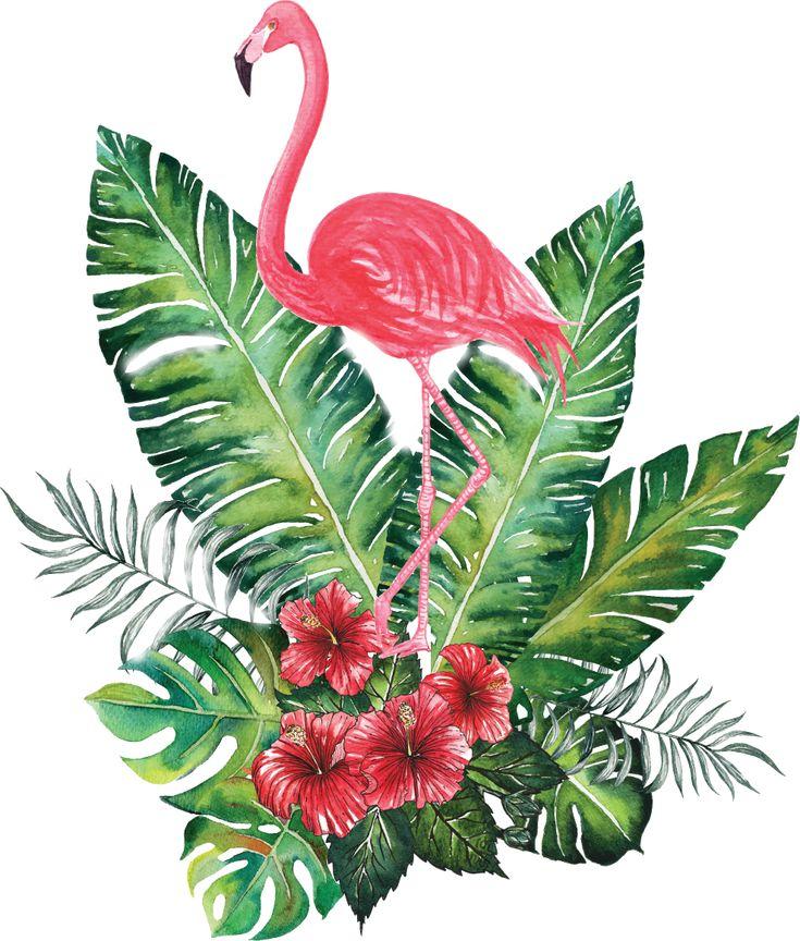 Fondo flamingo transparente, para cualquier diseño que quieras crear.