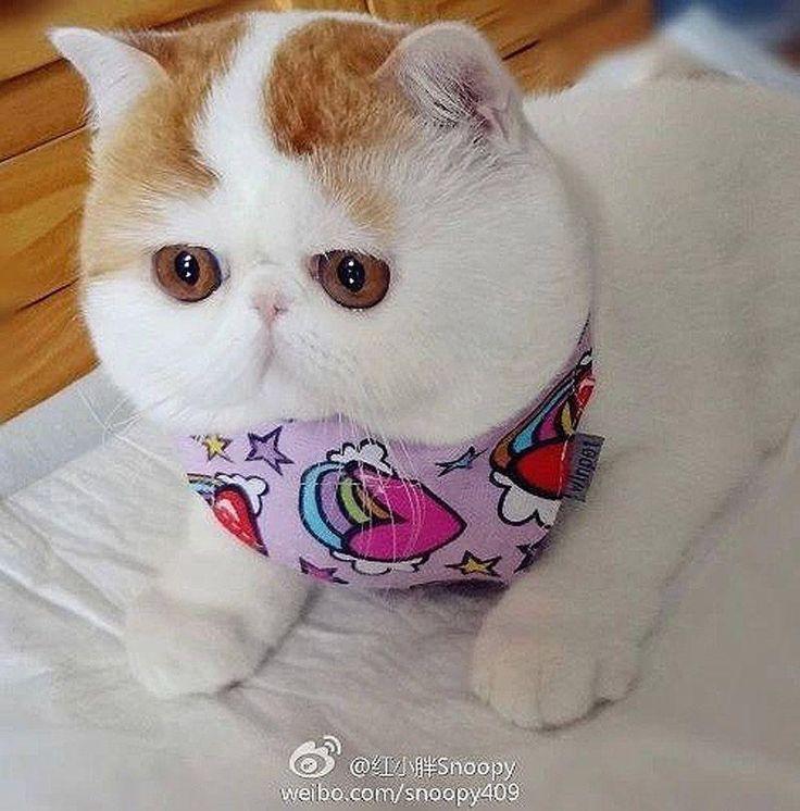 Кот Снупи бейб и его гардероб
