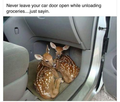 ALWAYS leave your car door open<-- YES