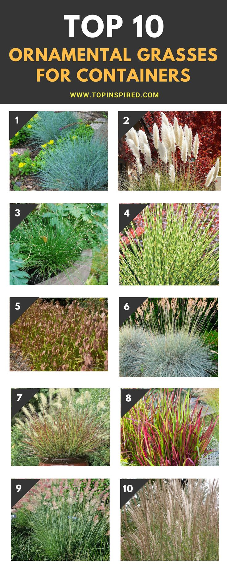 536 best gardening ornamental grasses images on for Ornamental grass in containers for privacy