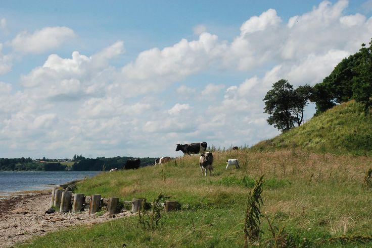 Hindsgavl gamle Slotsbanke ved Middelfart Fyn. Et flot natur område helt unikt.