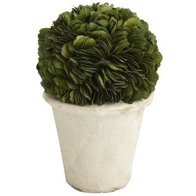 Preserved Boxwood Short Topiary | Pier 1 Imports