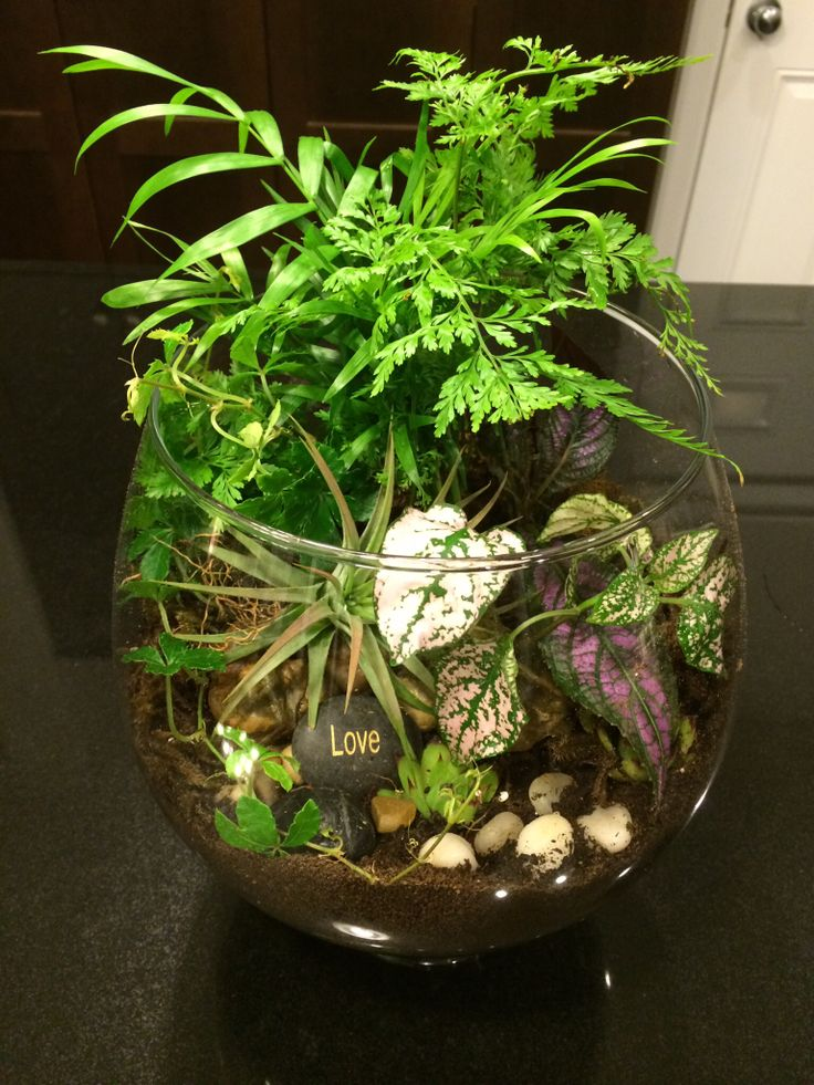 It's a jungle out there terrariums by Niti Nielsen