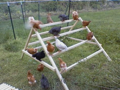 Why didn't I think of this? or my mom or   her mom?  Our chickens used to sit up in the trees and it was hard finding them   before sunset to put them in the coop and keep them safe from foxes.  This is a   gem of an idea.    How to build a simple jungle-gym for your   chickens