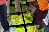 Glide between cliff tops and gaze at the rainforest canopy through the glass floor of the Scenic Skyway!